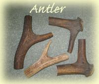 antler walking stick